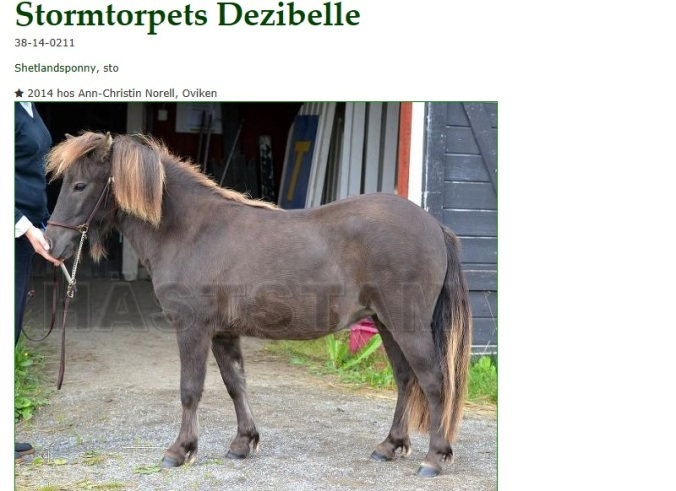Dezibelle