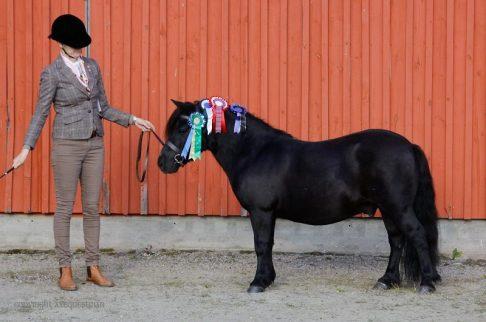 Terve normaali hevonen ei tarvitse C-vitamiinilisää